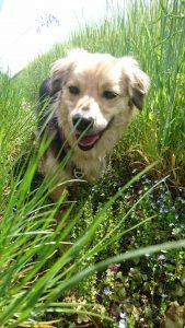 Katja unsere Mischlingshündin aus dem Tierschutzverein ein Herz für Hundekinder e.V: